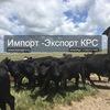 | Корова| Породы коров | Продажа КРС |