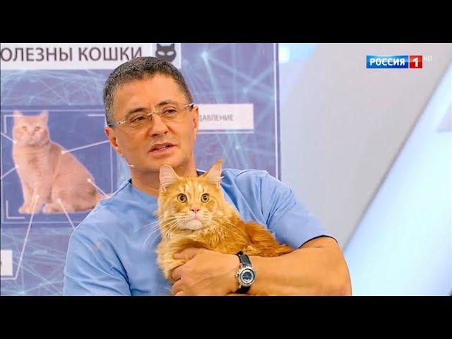 О самом главном Кошки и здоровье сухость кожи опасное мясо