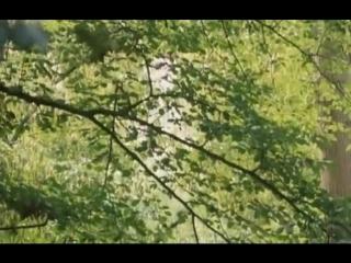 Ивовое дерево (2005) بید مجنون