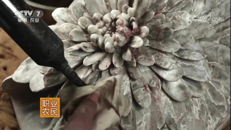 Каменные цветы ''Ши Хуа'', или ''Фанчэн Ши ЦзюйХуа'' каменные хризантемы из уезда Фанчэн (округ Наньян, провинция Хэнань). Камен
