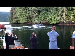 Ничего необычного, просто киты на заднем дворе дома (6 sec)