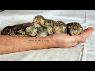 Baby Kittens and Mom Cat  of Funnycatsandnicefish Stream 2017
