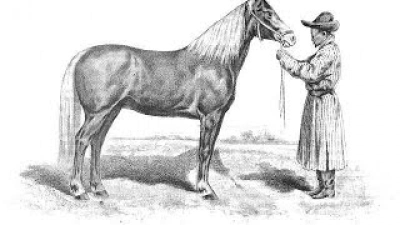 Жұмабай Керейбайұлы атбегі сыншы