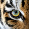 Tigrus Project