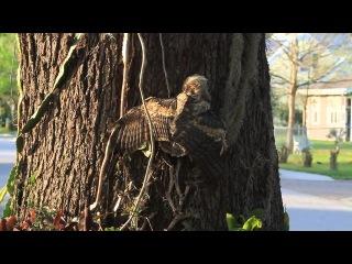young owl climbing tree