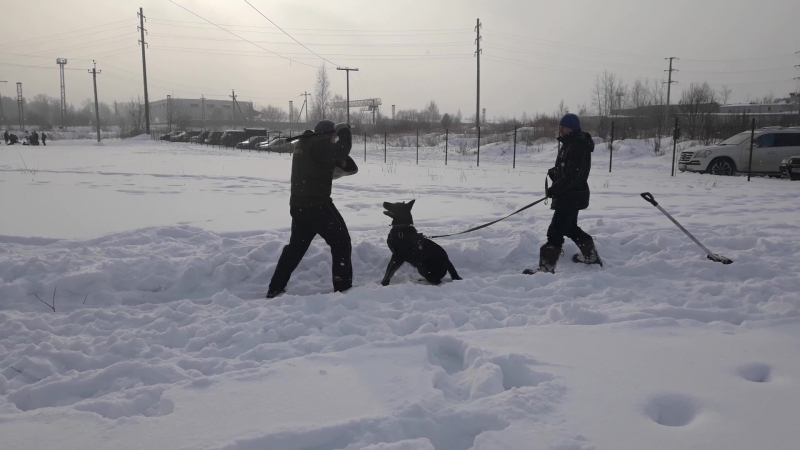 Хельхаус Застава Тренинг защита с Евсиковым