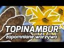 Zapomniane warzywa TOPINAMBUR FOODhacker 13