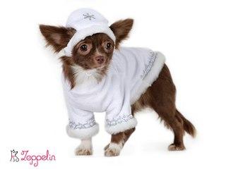 Корм для маленьких собак отзывы