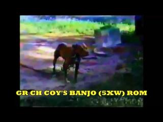 GR CH COYS BANJO 5xW ROM
