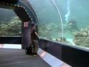 Девочка из океана Ocean Girl Сезон 1 Серия 1