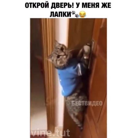 """😂 ВайнТут 😂 on Instagram 🎥 Он сказал открой дверь 🤔😹😂 Что Вам слышится @ ❤️ …"""""""