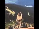 Esquilo Gritando