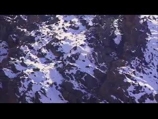 Захватывающая охота снежного Барса