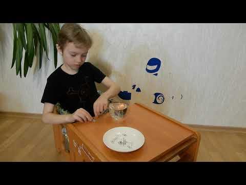 Опыт с водой и скрепками Эксперимент №4 скрепки не тонут в воде