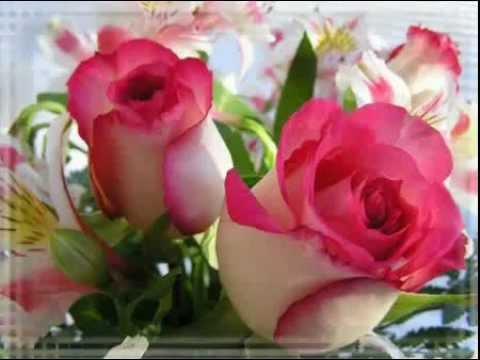 Всем женщинам в этот день Поздравления с днем рождения и много роз
