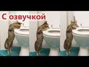 Приколы с котами с ОЗВУЧКОЙ – СМЕШНЫЕ КОТЫ! РЖАКА ДО СЛЁЗ! ТЕСТ НА ПСИХИКУ – PSO