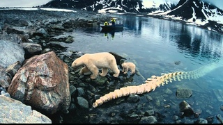 IMAX. Арктика 3D / IMAX. To the Arctic 3D (2012) Дублированный трейлер [HD] 1080p