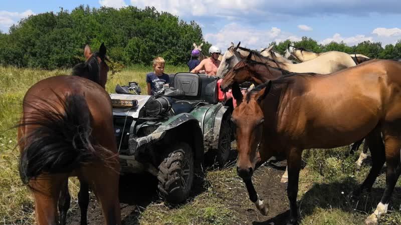 Нашествие лошадей в горах Геленджика
