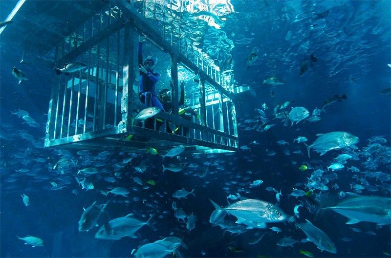 Крупнейший в мире аквариум в ТРЦ Дубай Молл, ОАЭ, изображение №9