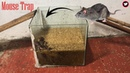 Rice Mouse Trap How to make a Mouse Trap homemade with Water Bottle Saving a lot of Rat Tip TRAP