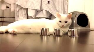 Кот и напёрстки! Хохма))