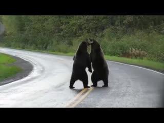 Battle bears
