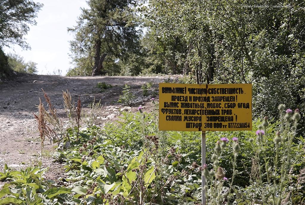 Частная собственность, Каменское плато, Березовая роща 2019
