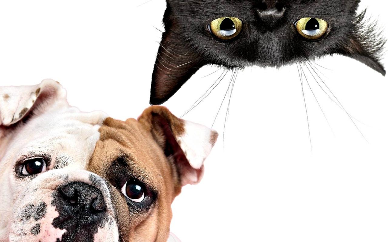 активизировать картинки животных для визитки нас