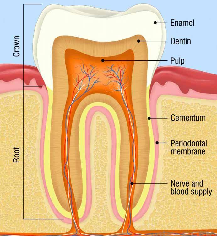 Посещение стоматолога - единственный способ убедиться, что сломанный зуб можно исправить.