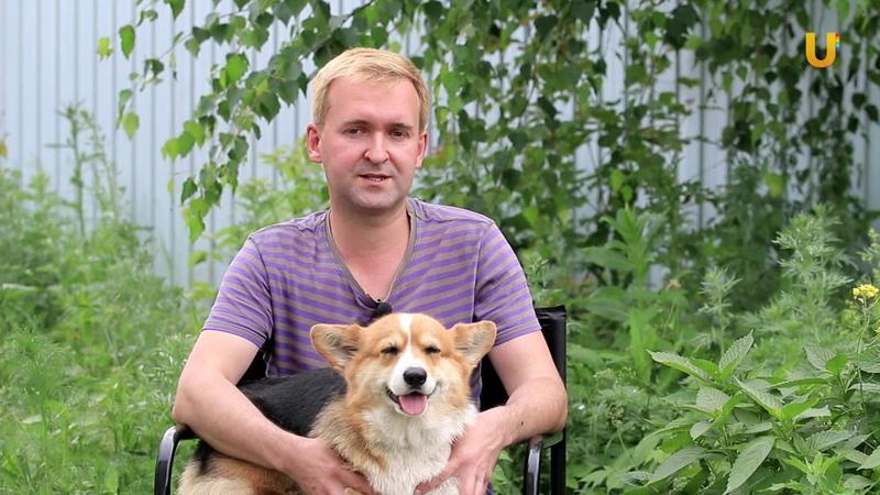Глазами животных 282 Вельш корги пемброк гордость английских заводчиков в Уфе
