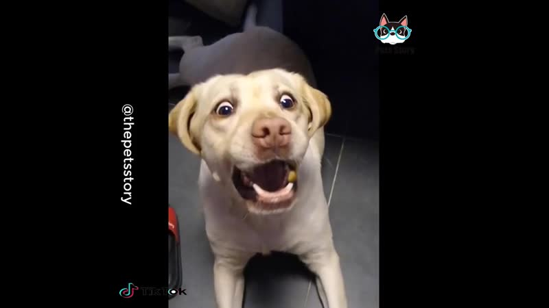 Dogs never fail to make us laugh _joy_ ( HD )
