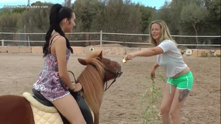 نسخة عن ponyboy Female Persuasion