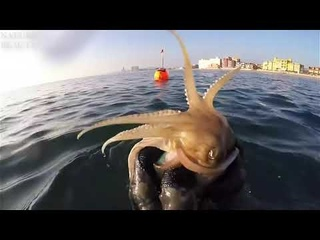 Amazing Catch Giant Lobsters Underwater   Big Octopus Hunting Skills in the sea   Catching fish
