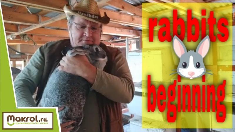 Видео инструкция по случке кроликов Video instructions for the Mating of rabbits Макляк Макрол смотреть онлайн без регистрации