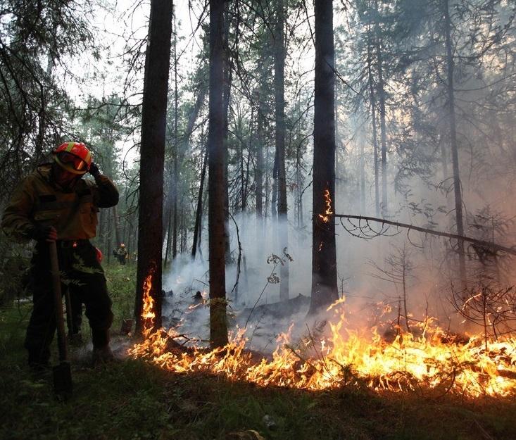 Очередной лесной пожар вспыхнул в КЧР