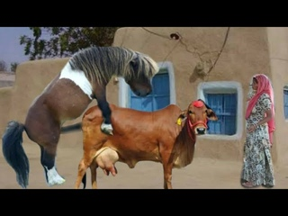 Excellent Animals Meeting | Cow and Donkey Breedang | Zebra And Horse Meeting Donkey Meeting