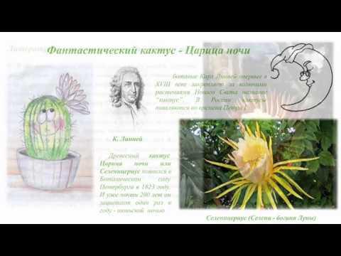 Ботанические причуды литературные изыски и фантазия Мариуса Петипа