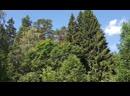 Сказочный лес. Волшебное соло.🎼