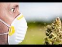 Аллергия болезнь дурного живота или горе от ума