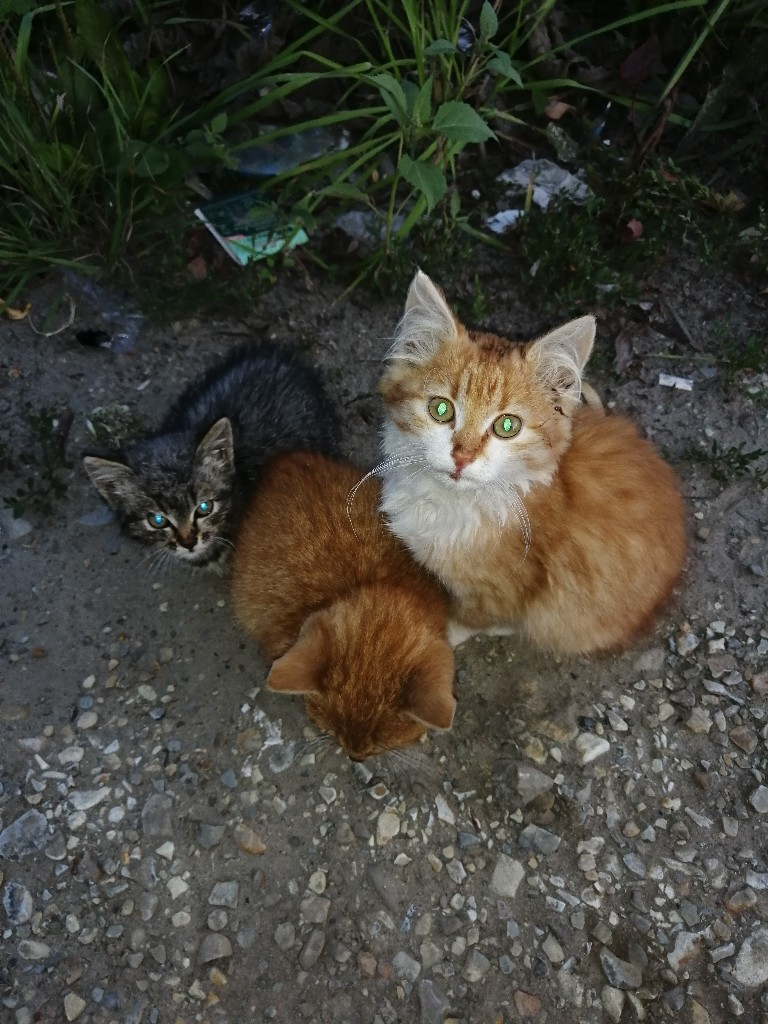 Срочно нужна дом или передержка для трех котяток, малышей вы
