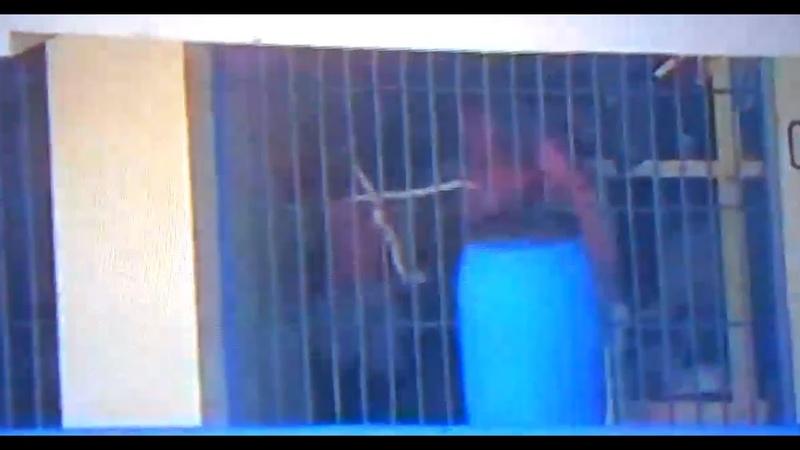 Gruselig Video soll zeigen wie Bandenhäftlinge Mordaufträge in mysteriöser Zeichensprache geben