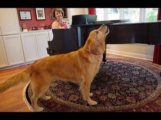 Лучшая собака воет - собаки воют видео сборник