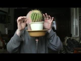 Пародия на видео Человек с пальцами играет на кактусе -- Геннадий Горин