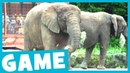 Learn Zoo Animals | What's That Sound? Game for Kids | Maple Leaf Learning