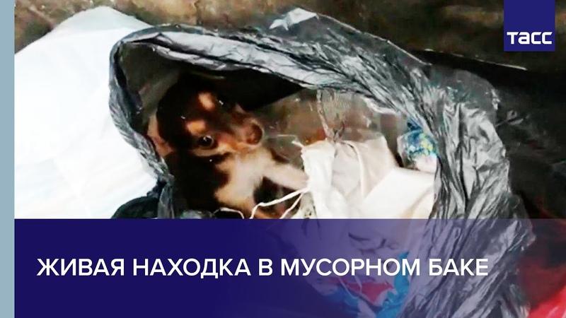 Живая находка в мусорном баке. В Бийске спасли щенка