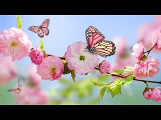 """ЦВЕТЫ это чудо природы! Фредерик Шопен """"Весенний Вальс"""""""