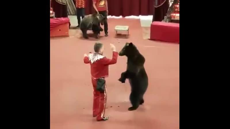 Танцуй - Номер Медвежат Гризли