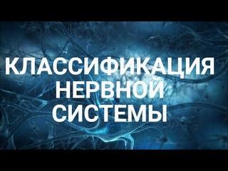 Центральная и переферическая нервная ситсема