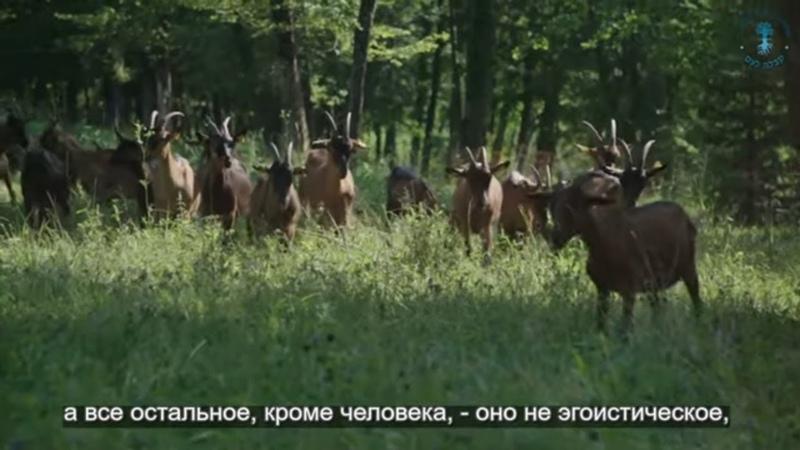 Чернобыль. Взгляд каббалиста