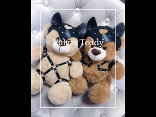 Vulgar teddy